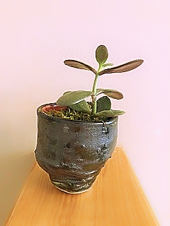 Potted Pixie 3