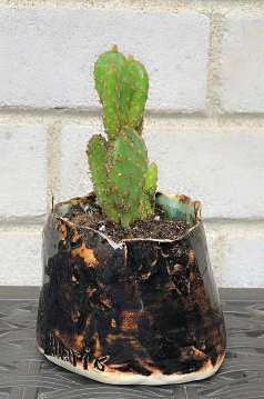 New Home for the Prickly Pear 1